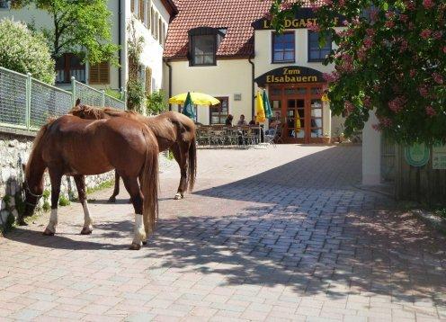 Landgasthof zum Elsabauern in Pruppach in der Oberpfalz Bayern